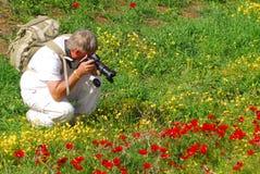 Anemone Red Flower Blossoming royalty-vrije stock afbeeldingen