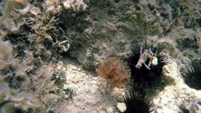 Anemone sea bottom stock video footage