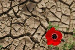 Anemone su una priorità bassa incrinata del fango Immagini Stock