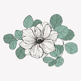 Anemone surrounded by eucalyptus leaves. Vector vintage anemone. Hand drawn illustration. Great for wedding invitations, birthday, valentine`s, save the date and Royalty Free Stock Image