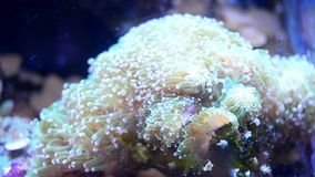 Anemone in water. Inside the tank on a depth stock footage