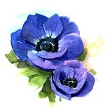Anemone. Watercolor illustration Royalty Free Stock Images