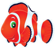 Anemonefish Stock Images