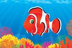 Anemonefish vector illustration