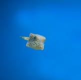 Anemonefish Fotografía de archivo libre de regalías
