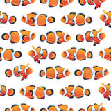 Anemonefish (Clownfish) shoal white seamless vector pattern Royalty Free Stock Images