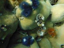 Anemonen Andaman-Meer südlich von Thailand Stockfoto