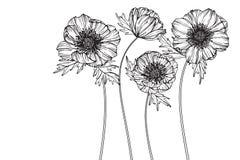 Anemonen blommar teckningen och skissar med linje-konst Royaltyfria Bilder