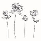 Anemonen blommar teckningen och skissar med linje-konst Arkivfoto