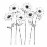 Anemonen blommar teckningen och skissar med linje-konst Arkivbild