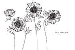 Anemonen blommar teckningen och skissar med linje-konst på vit backgr Royaltyfri Foto