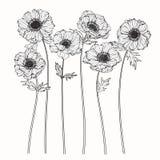 Anemonen blommar teckningen och skissar med linje-konst på vit backgr Arkivbilder