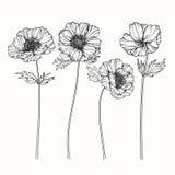 Anemonen blommar teckningen och skissar med linje-konst på vit backgr Royaltyfria Foton