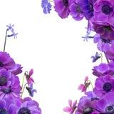 Anemonenblumenstrauß mit Rahmen Lizenzfreies Stockfoto