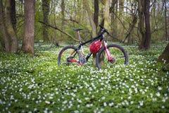 Anemones και ποδήλατο Στοκ Εικόνα