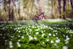 Anemones και ποδήλατο Στοκ εικόνες με δικαίωμα ελεύθερης χρήσης