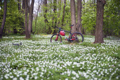 Anemones και ποδήλατο Στοκ φωτογραφίες με δικαίωμα ελεύθερης χρήσης