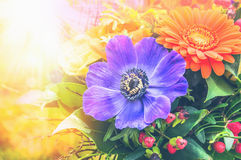 Anemones και gerbera στην ηλιόλουστη δέσμη λουλουδιών Στοκ Φωτογραφία