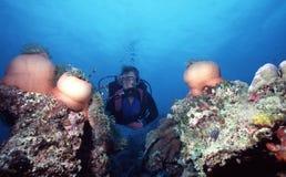 anemones πεδίο Στοκ φωτογραφία με δικαίωμα ελεύθερης χρήσης