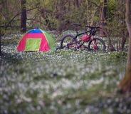 Anemones σε ένα στρατόπεδο Στοκ εικόνες με δικαίωμα ελεύθερης χρήσης
