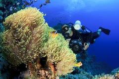 anemones φωτογράφος υποβρύχιο&sigm Στοκ εικόνες με δικαίωμα ελεύθερης χρήσης