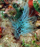 anemones Στοκ φωτογραφίες με δικαίωμα ελεύθερης χρήσης