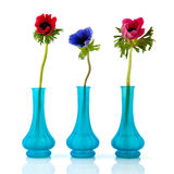 Anemones azuis pequenos dos vasos imagens de stock royalty free