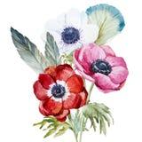 Anemones Royalty Free Stock Photo