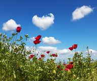 Anemones and cumulus clouds Stock Photo