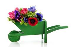 Anemones do ramalhete no carrinho de mão de roda foto de stock royalty free