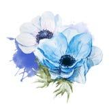 Anemones flowers vector illustration