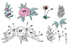 Anemones flowers, blueberry vector illustration, floral pattern, hand drawn. Anemones roses pink flowers, blueberry vector illustration, floral pattern, hand Stock Photo