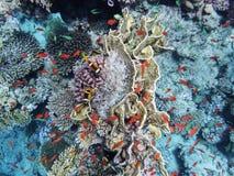 Κάτω από το νερό, δύο αλιεύουν τον κλόουν στα anemones, goldfish και άλλα ψάρια, την πυρκαγιά και άλλα κοράλλια στο κατώτατο σημε στοκ εικόνα