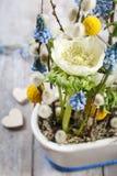 Anemones and grape hyacinths (blue muscari) Royalty Free Stock Photos