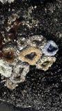 Anemones at low tide Στοκ εικόνες με δικαίωμα ελεύθερης χρήσης