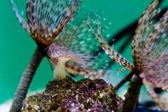 Anemones in ocean water stock photography