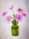 Anemones. Pink anemones in a green vase on a pink background Royalty Free Stock Image