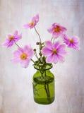 Anemones Royalty Free Stock Image