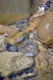 Tide pool at Paradise Cove,. Anemones in a tide pool at the Paradise Cove in Malibu, California Royalty Free Stock Photo