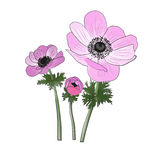 Anemones watercolor and ink painting imitation Royalty Free Stock Image