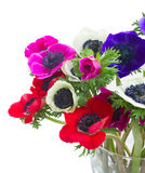 Anemones on white Royalty Free Stock Photos