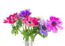 Anemonowi kwiaty obrazy royalty free