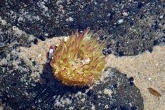anemonowy akwarium żadny morze brać dziki obrazy royalty free