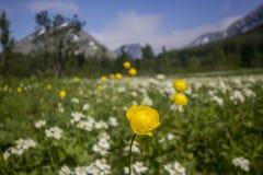 Anemonowy biarmia i kuli ziemskiej kwiat Zdjęcie Royalty Free