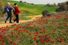 Anemonowy Czerwony kwiatu Kwitnąć Fotografia Stock