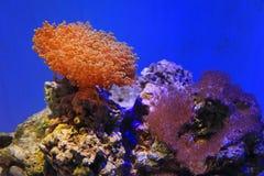 anemonowy morze Zdjęcie Stock