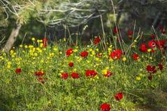 Anemonu pole w lesie zdjęcia stock