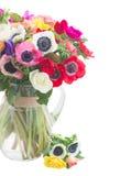 Anemony na bielu zdjęcia stock