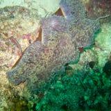 Anemoon onderwater, een dier die als een bloem kijken stock foto