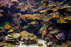 Anenome in aquarium bij dierentuin Royalty-vrije Stock Foto's
